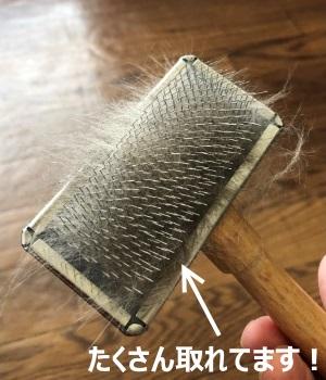 スリッカーブラシについた猫の抜け毛の写真