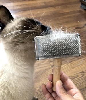 スリッカーブラシにスリスリする猫の写真