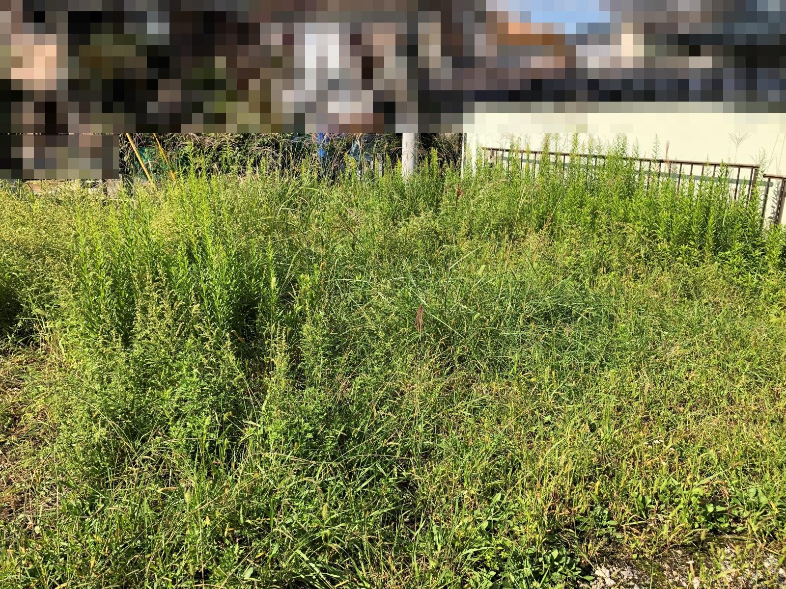 生い茂った雑草の写真