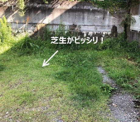 雑草が生い茂った宅地の写真