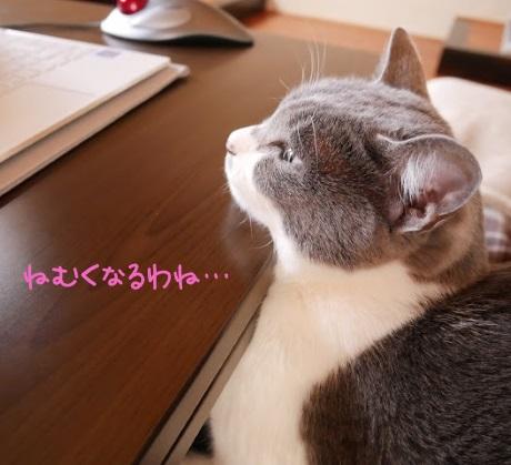 パソコンを見ながら眠そうな猫の写真