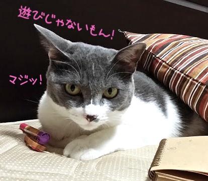 ペンを押さえてこちらを見ている猫の写真