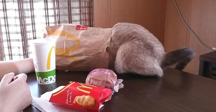頭から紙袋に入る猫