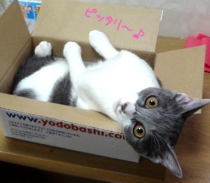 箱に入って得意気な子猫