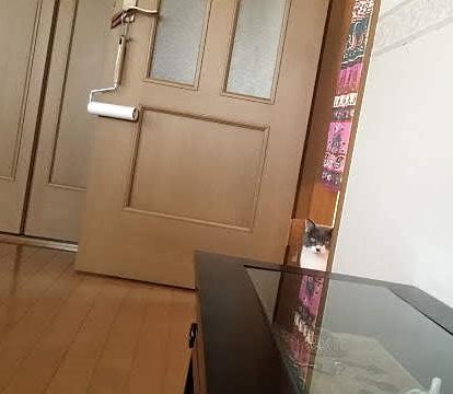 ドアの隅から見ている猫の写真