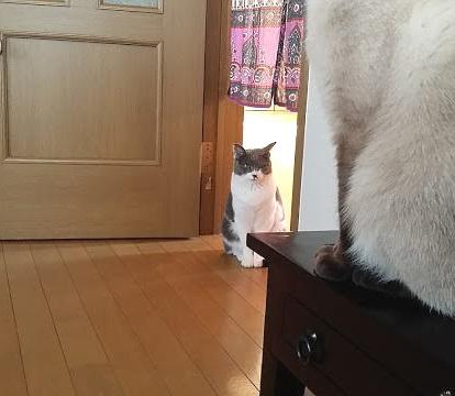 ドアの隅から動かない猫の写真