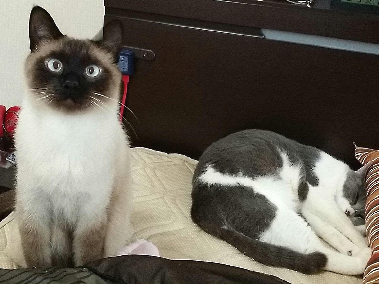 座っている猫と寝ている猫の写真