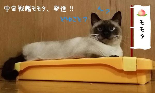爪磨きに寝ている猫の写真