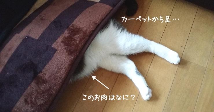 カーペットから猫の足が出ている写真