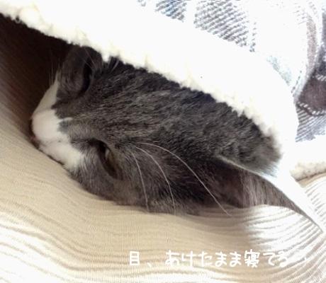 爆睡している猫の写真