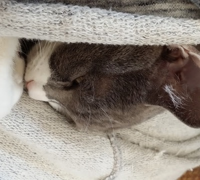 ブランケットに包まれて眠る猫の写真