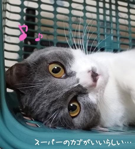 スーパーの買い物かごで遊ぶ猫の写真