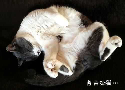 あおむけで寝ている猫の写真