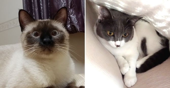 二匹の猫の写真