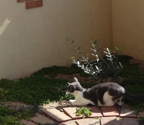 虫を追いかけて遊ぶ猫の写真