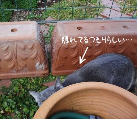 鉢に隠れている猫の写真