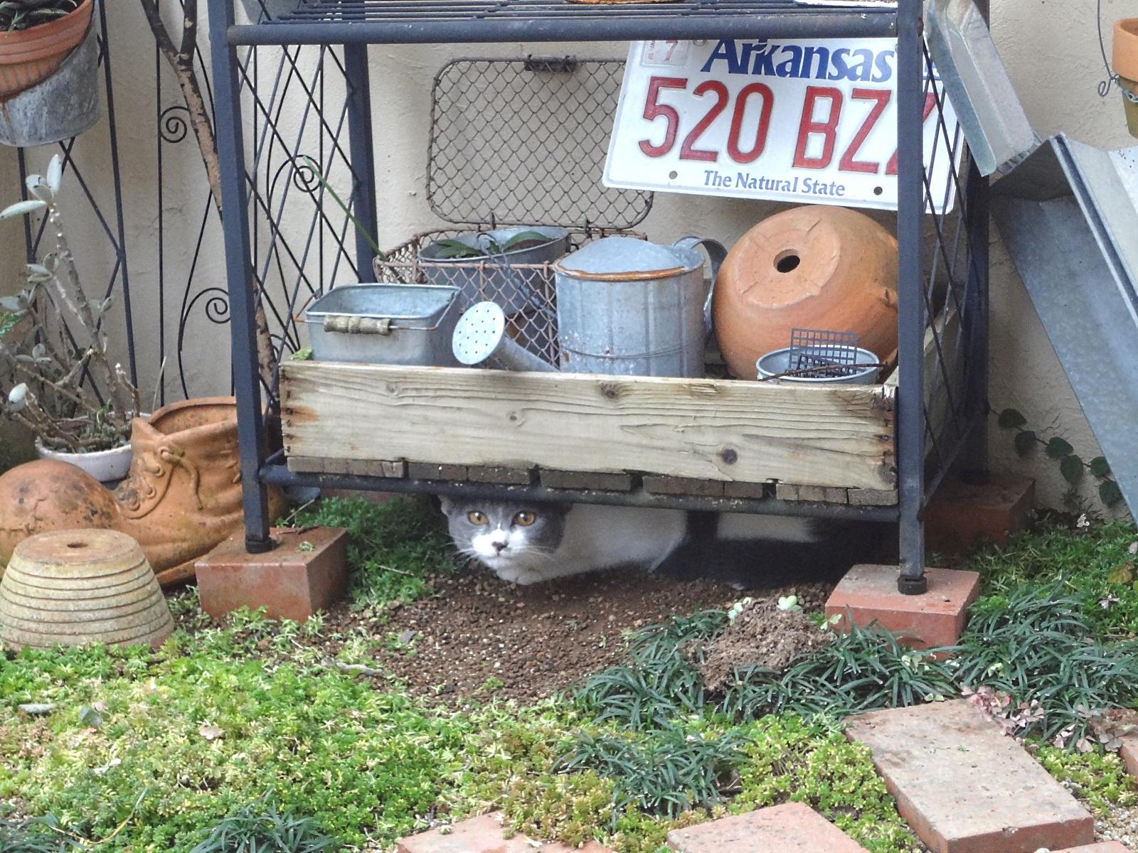 中庭の棚に潜って遊んでいる猫の写真