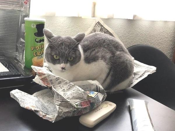 テーブルの新聞紙に座っている猫の写真