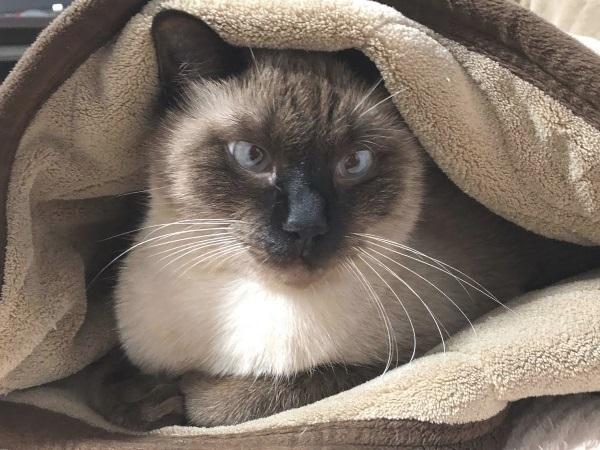 毛布にくるまっている猫の写真