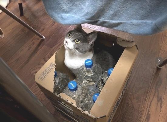 ペットボトルと一緒にケースに入っている猫の写真