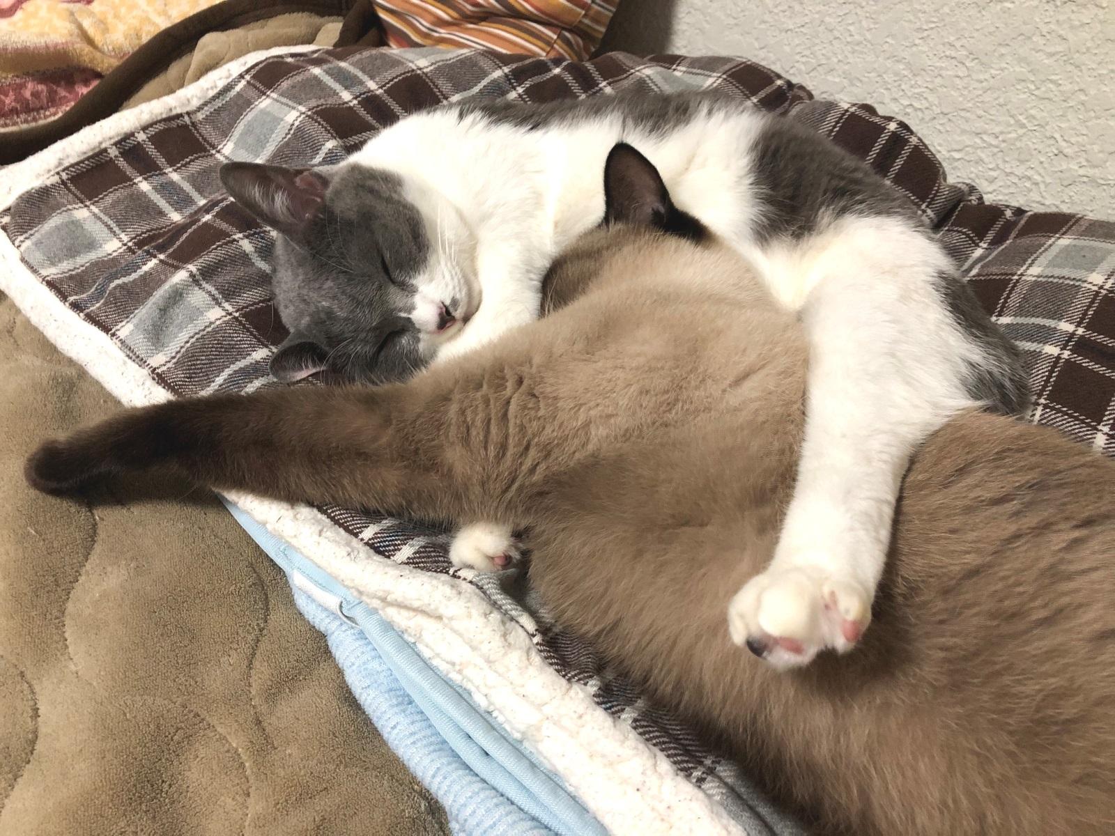 もつれあって寝ている猫の写真