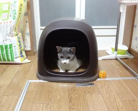 トイレのカバーに入っている猫の写真