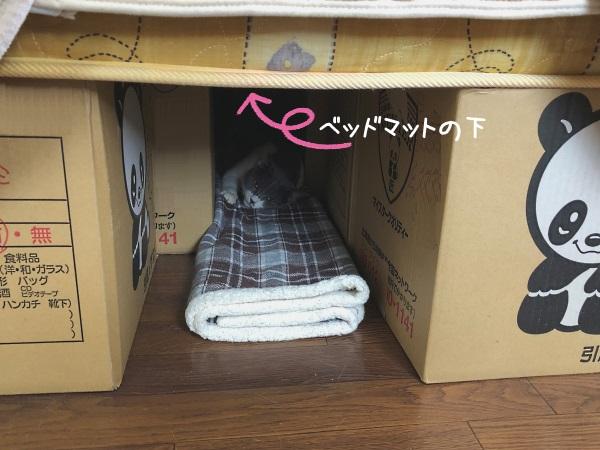 ベッドマットの下で寝ている猫の写真