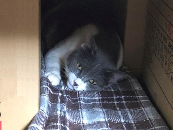 穴ぐらで寝ている猫の写真