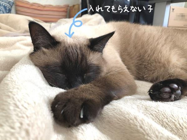 ベッドで寝ている猫の写真