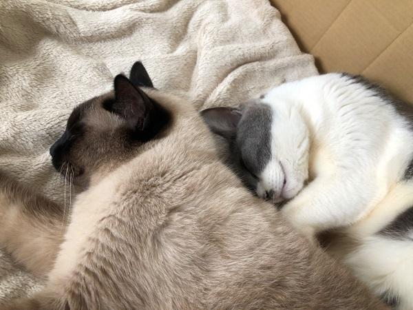 仲良く眠る2匹の猫の写真