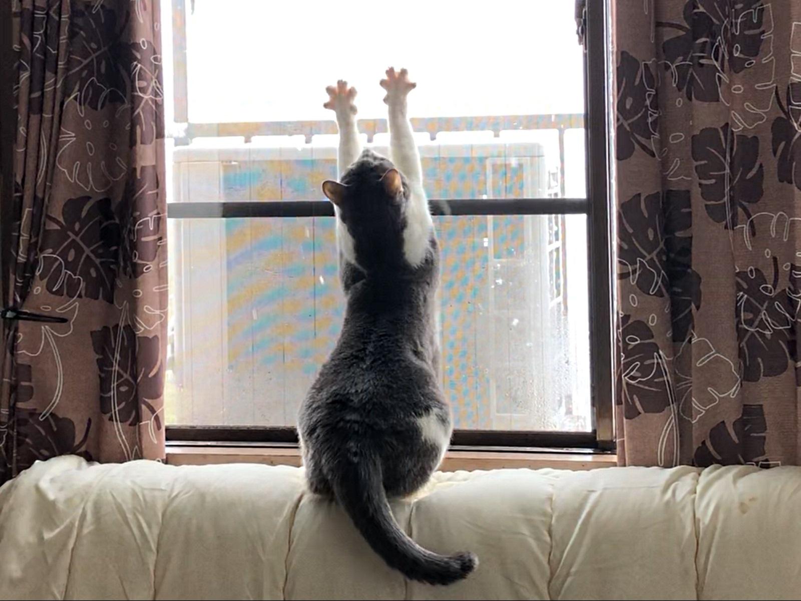 窓辺で伸びをする猫の写真