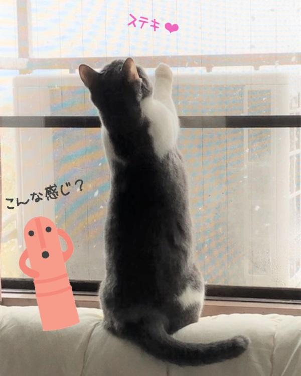 雪に見とれる猫の写真